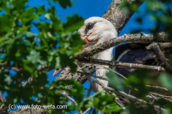 Storch Orchidee 05