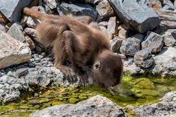 Dschelada_Zoo_Zürich_06