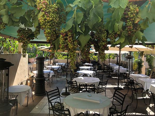 trellis grapes.jpg