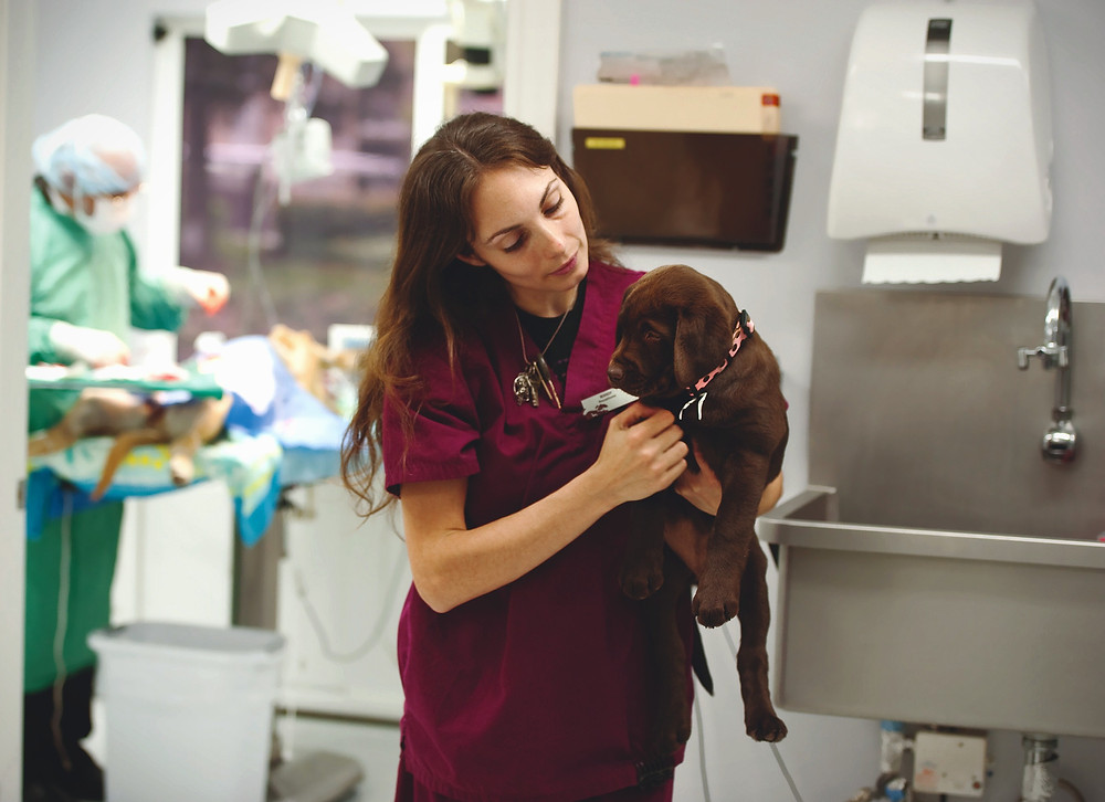 A puppy visiting the Vet