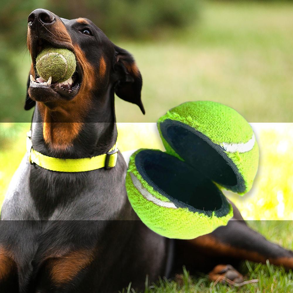 Doberman chewing on tennis ball