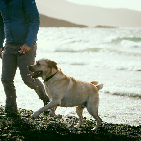 Why You Should Rethink the Game of Fetch