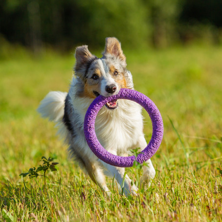 The Ultimate Guide to Safe Dog Toys - Part 1