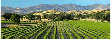 Vineyards.retouch proof.120x40.jpg