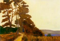Cypress Grove Trees