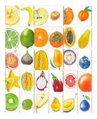 Sketchbook.Fruit