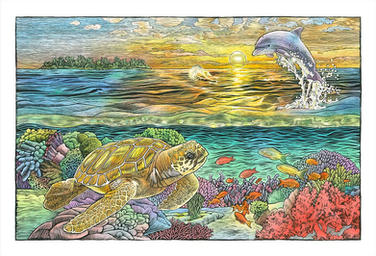 Sea Turtle Dolphin