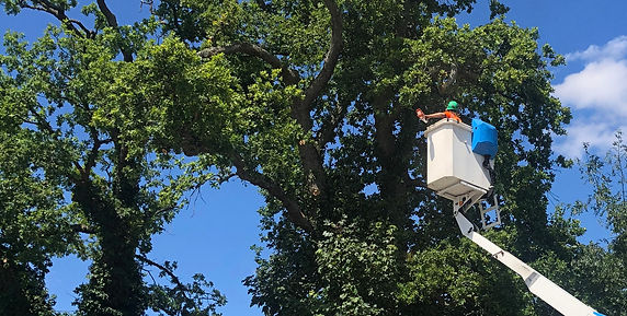 Groundlord Limited are an Arb Approved and CHAS compliant professional arboricultural company offering a complete package of tree services to both domestic and commercial clients across the South of England.