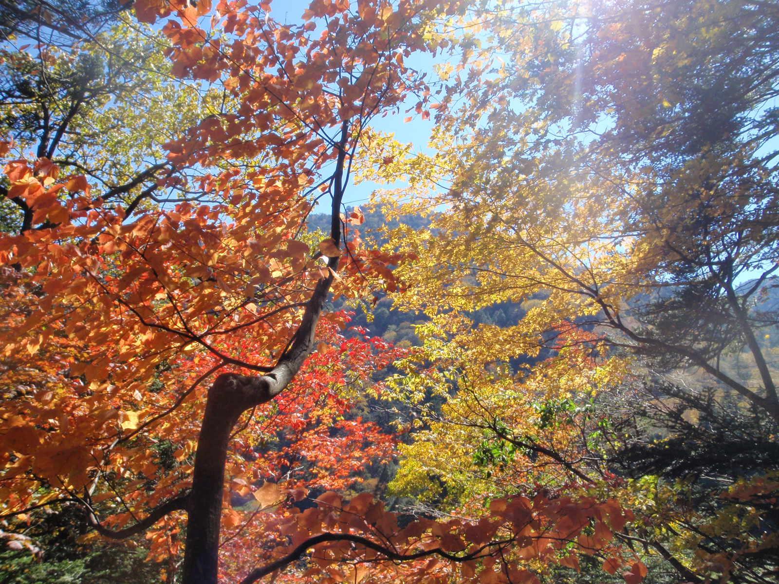 紅葉萌える秋の森へ