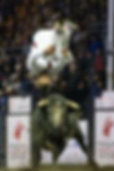 Bull Jumper 2.jpg