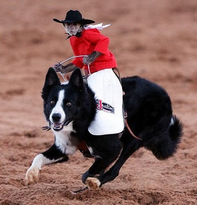 Whiplash The Cowboy Monkey.jpg