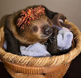 Onyx sloth.jpg