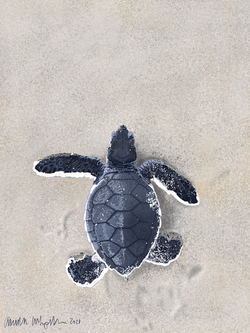 turtle small