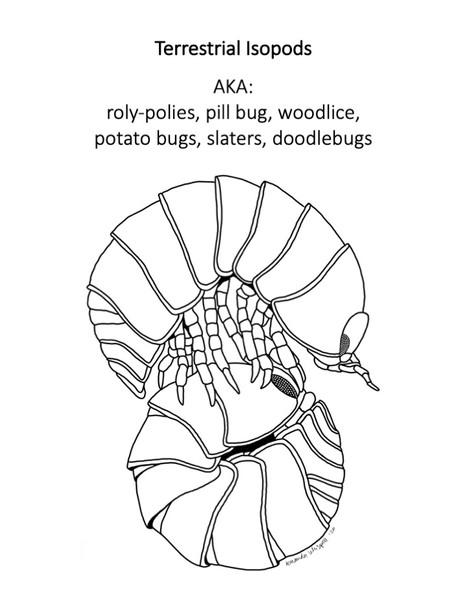 New #CoBioArt Post - Terrestrial Isopods
