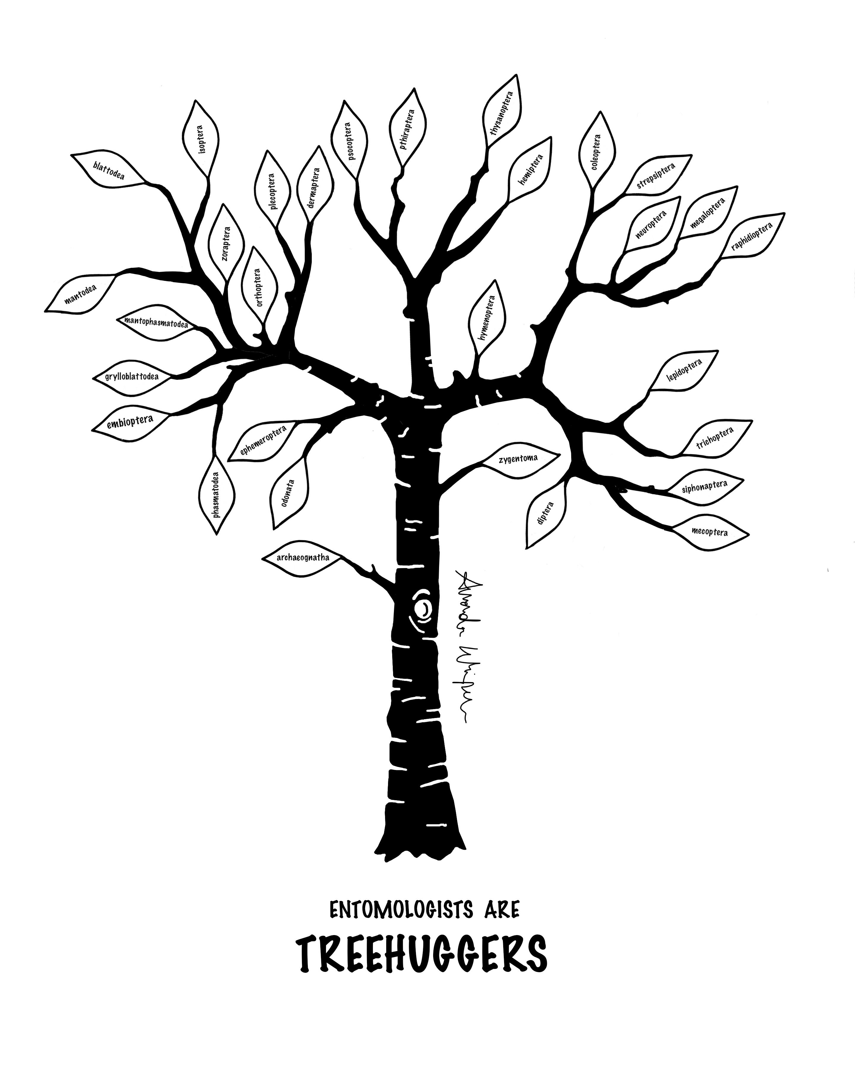 Rutgers Entomology Phylogenetic Tree