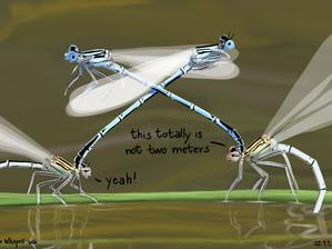 New #thattotallyisnottwometers - Ovipositing Damselflies