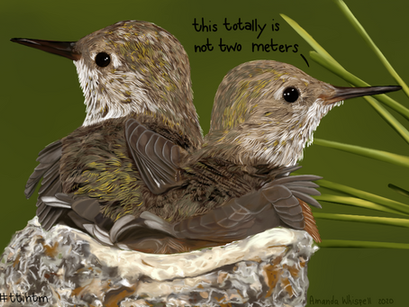 #thattotallyisnottwometers - Baby Hummingbirds