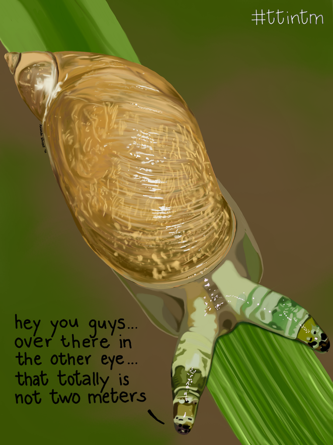 """""""Zombie"""" snail infected by the green-banded broodsac"""