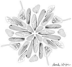 Wing Mandala