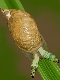 Snail - No Text