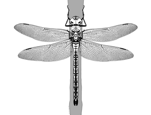 New #CoBioArt Post - Is it a dragonfly or a damselfly?