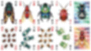 2. Insecta Deck web.jpeg