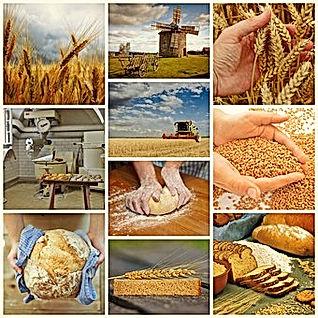 bread-1579136__340.jpg