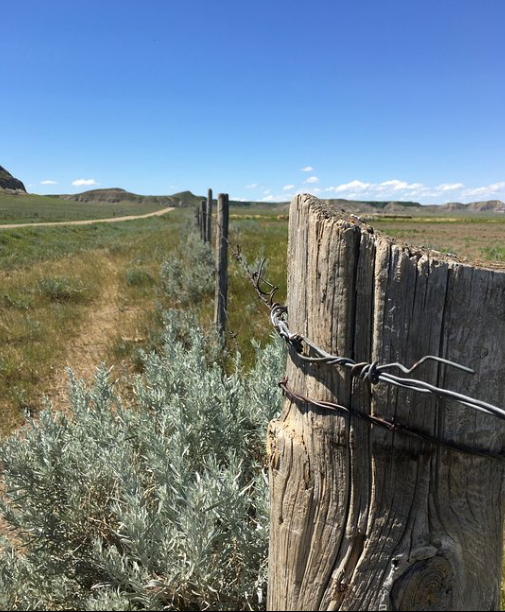 Along the fence line