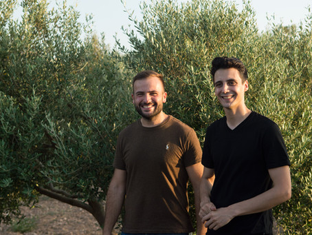 From Branch to Bottle - Experience harvesting and bottling Olive Oil in Malta