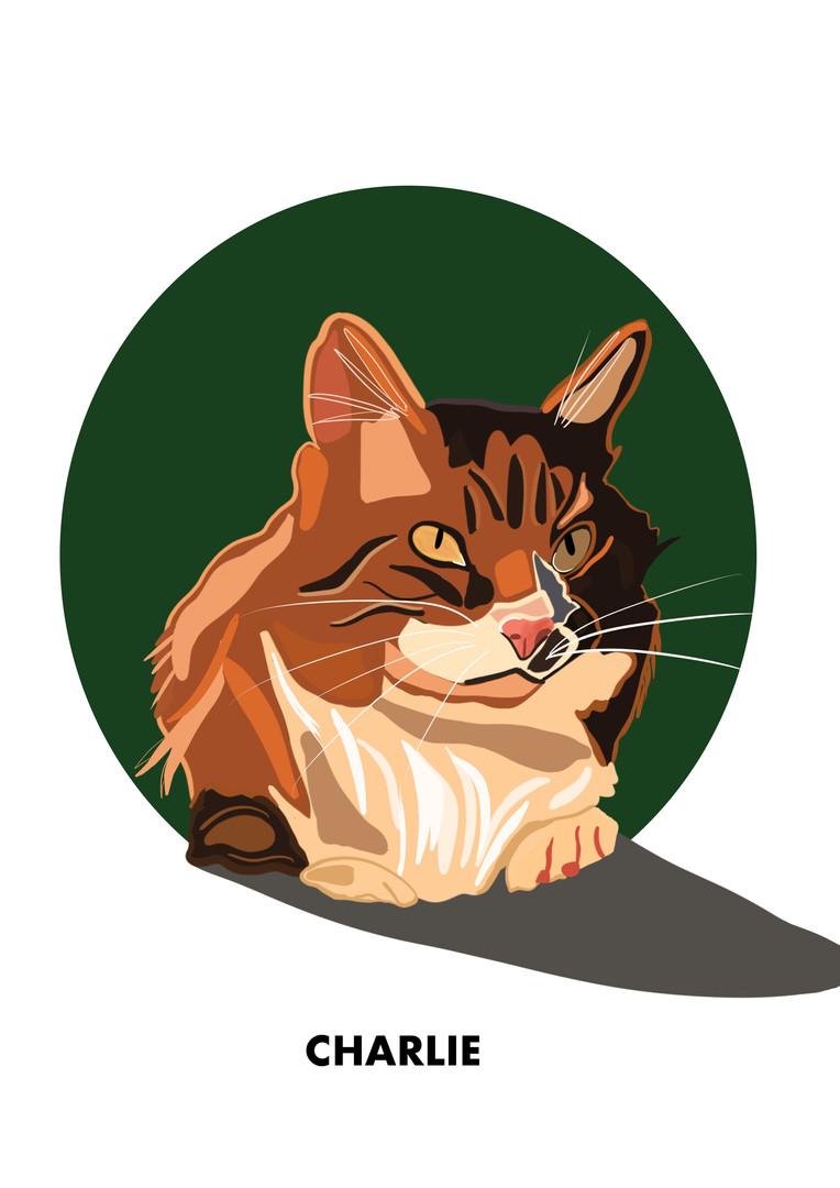 Animal Illustration
