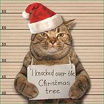 21023 Guilty Cat 123x123 P1 Proof (Mediu