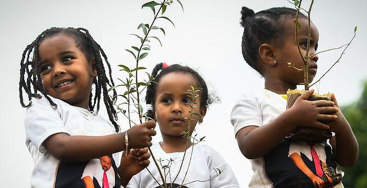 801x410_ethiopie_arbres.jpg
