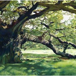 2 Oak Tree.jpg