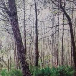 14 Woods.jpg
