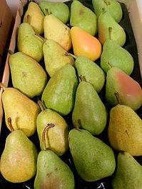 Cagette de poire guyot, première récolte de l'exploitation Les vergers des grives