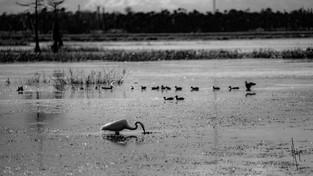 30-wetlands