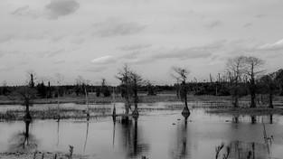 29-wetlands