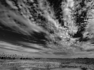 05-wetlands