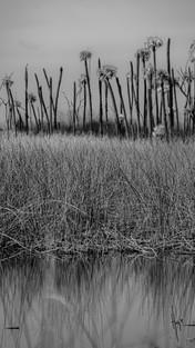 01_wetlands