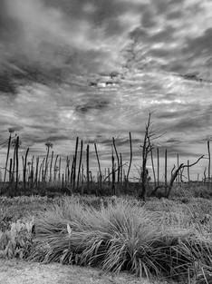 04-wetlands