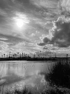 22-wetlands