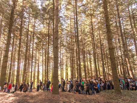 Forest Seeds - actividad outdoor en otoño