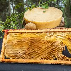 DESCONNEXIONS_Activitat abelles