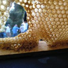 Desconnexions activitat abelles