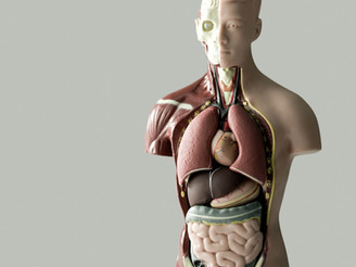 Why are organs in TCM described so differently? 了解中医脏腑