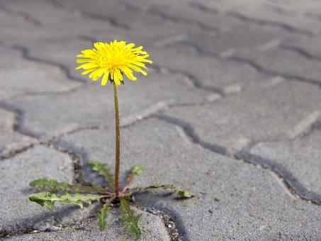 פרח יציץ ...כל חבריו שם בגן הוא לבדו עומד כאן