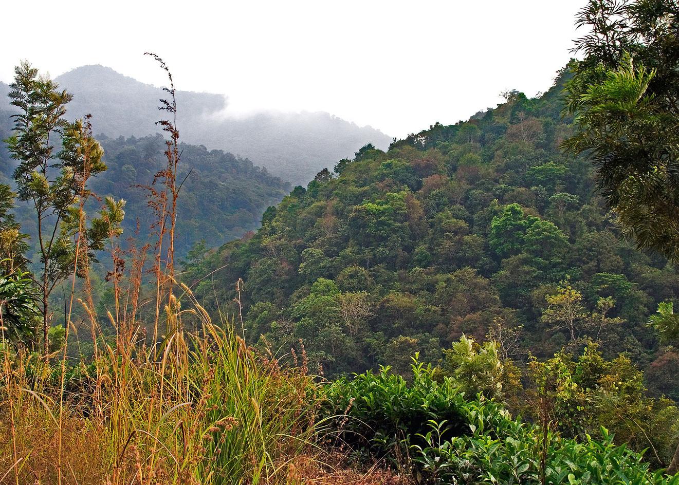 Coastal Mountains, Karnataka, India