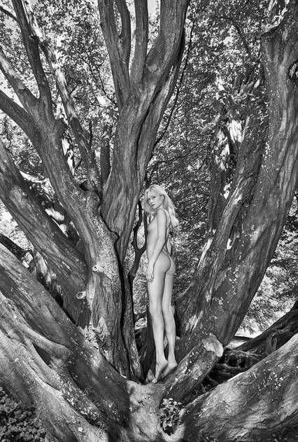 Kate tree.jpg
