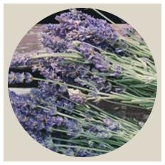 event_lavender.png
