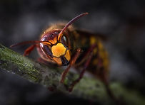 A close up image of a wasp